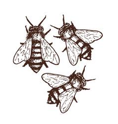 Honey bees sketch vector