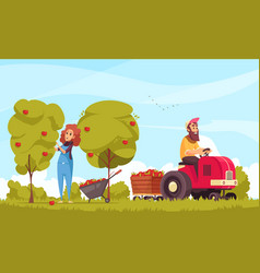 gardening apples harvesting cartoon vector image
