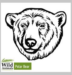 polar bear head mascot - bear head vector image