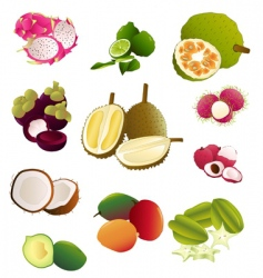 thai fruits vector image