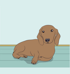 A dachshund dog is in the room vector