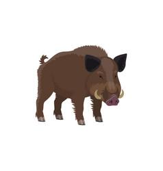 Boar hog hunt and zoo wild animal vector