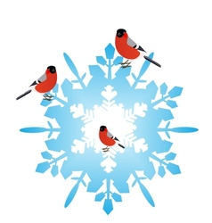 Bullfinches on a snowflake vector image