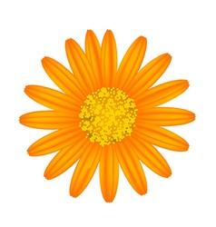 Orange Daisy Flower on A White Background vector