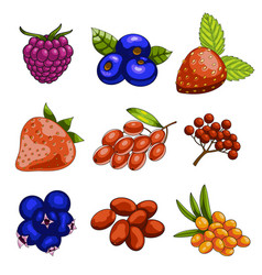 set of cartoon berries vector image