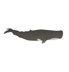 Cachalot or sperm whale on a white background vector image vector image