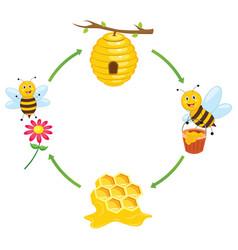 Bee producing honey vector