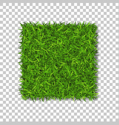 Grass square 3d beautiful green grassy field vector