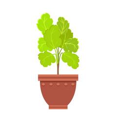 Healthy kalanchoe indoor plant in big clay pot vector