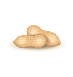 Realistic detailed 3d groundnut nuts set vector