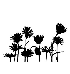 Silhouettes of chamomiles vector