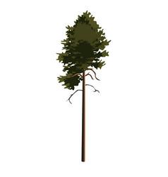 Tree pinetree clip art vector
