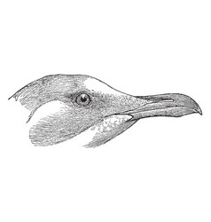 White headed gull head vintage vector