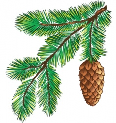 branch of pine with cone vector image vector image