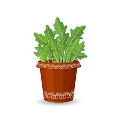 arugula in a flower pot vector image