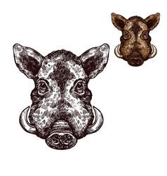 Boar aper muzzle sketch wild animal vector