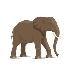 Elephant animal icon of african savanna mammal vector