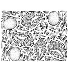 Hand drawn background of ripe pomegranate fruits vector