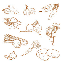 root vegetables vegetarian farm products set vector image