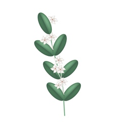 White Madagascar Jasmine Flowers vector