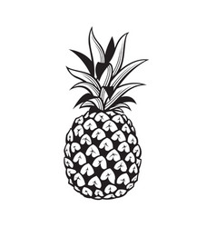 image of pineapple fruit vector image