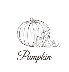 Pumpkin sketch drawing with leaves vector