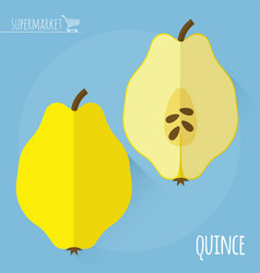 raw fresh quince vector image