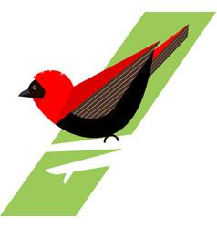 Red bishop bird on a branch vector