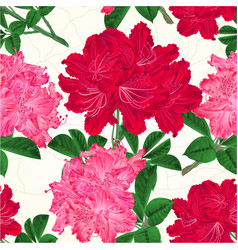 seamless texture red and pink rhododendrons vector image