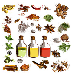 Set of hand drawn spices for design vector