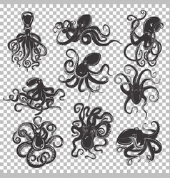 Set of isolated octopus mascot or tattoo vector