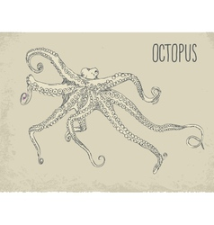 with octopus vector image