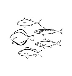 Sea Fish on White Background vector image vector image