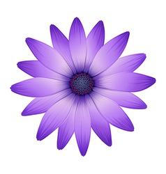 A fresh purple flower vector