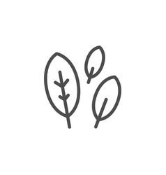 Bay leaf line icon vector