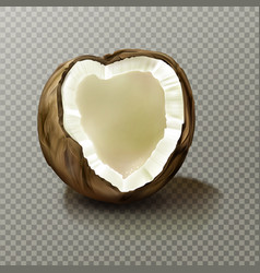 Realistic coconut highly detailed empty coco nut vector