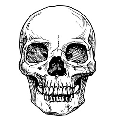 lower jaw vector image