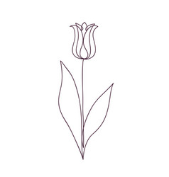 beautiful tulip flower line art vector image