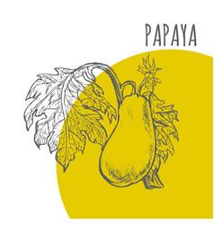 papaya fruit botanical sketch plant vector image