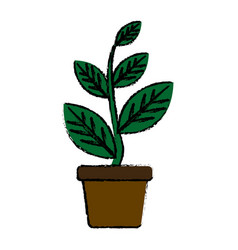 Potted plant natural decoration interior image vector