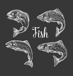 Trout and salmon fish sketch vector