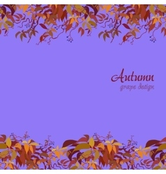 Autumn grape vine vector image