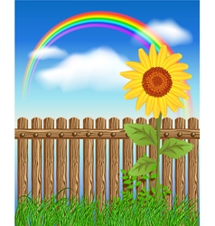 Wooden fence on green grass with sunflower vector image vector image