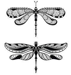 set of dragonfly vector image vector image