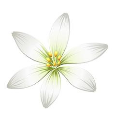 A fresh white flower vector