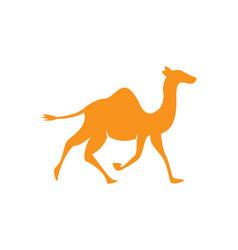 camel logo template vector image