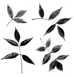 Set of ash leaves silhouettes vector