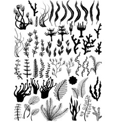 Set of marine plants and corals silhouettes vector