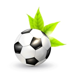 Soccer ball and green leaves vector image