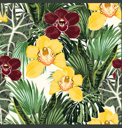 yellow burgundy orchid tropical exotic flower vector image